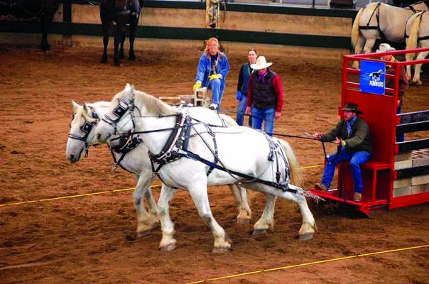 Salt and Pepper won overall in the World Percheron Congress competitions in 2010 and 2018. Clover has owned the horses since they were three year-olds, and has driven them as a team for 12 years. (Submitted)
