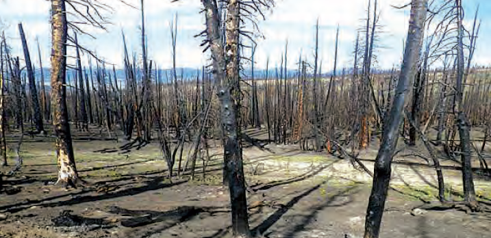 Example of high fire severity within fire perimeter. Priority areas for planting white bark pine. (USFS)