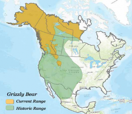 Current and historic ranges of the continental grizzly bear. PHOTO COURTESY OF IGBC
