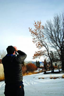 Above – Tom Forwood, Jr., Christmas Bird Count (CBC) compiler for the Ruby Valley CBC count eyes some cedar waxwings in a tree in Sheridan.  (J. Taylor photos)