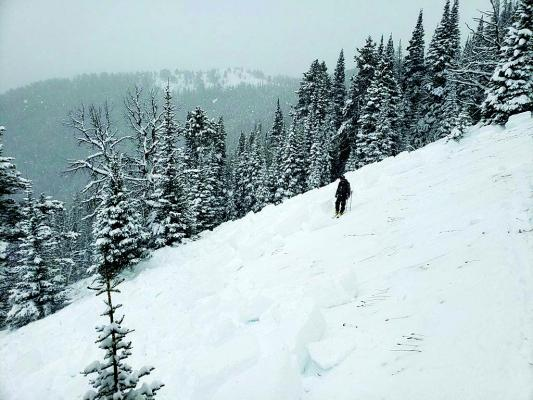 A skier on South Meadow Creek surveyed the results of an  avalanche triggered by the group he was with. (Submitted)