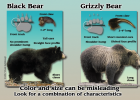 INFOGRAPHIC OF BE BEAR AWARE