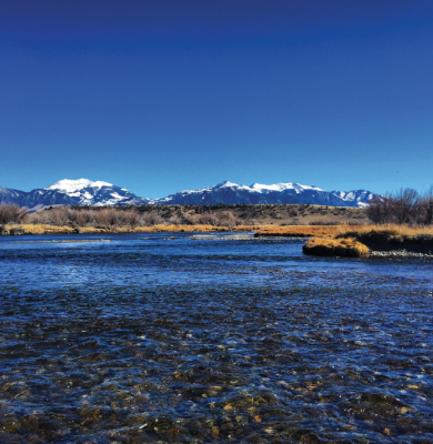 The Madison River.  PHOTO BY ABIGAIL DENNIS