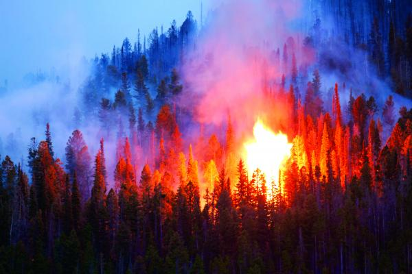 The Virginia Creek fire burned about 70 acres in August of 2018. (File photo)