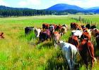 Ranchers see the new WOTUS rules as being unhampered by federal regualtions. Conservationists worry about the impact of changes in the rules. (Oregon State University)